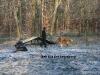 2010-11-28 Prüfung HFS Anouk - 18