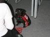2010-12-04 Obi Linden - 2