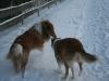 2010-12-20 Schneespaziergang - 21