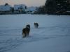 2010-12-20 Schneespaziergang - 26