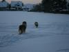 2010-12-20 Schneespaziergang - 27
