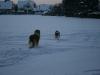 2010-12-20 Schneespaziergang - 28