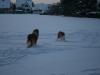 2010-12-20 Schneespaziergang - 29
