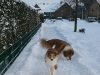 2010-12-20 Schneespaziergang - 3