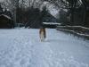 2010-12-20 Schneespaziergang - 41