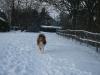 2010-12-20 Schneespaziergang - 42