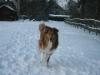 2010-12-20 Schneespaziergang - 44