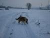 2010-12-20 Schneespaziergang - 45