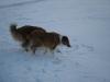2010-12-20 Schneespaziergang - 46