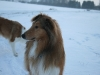 2010-12-20 Schneespaziergang - 48
