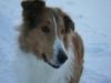 2010-12-20 Schneespaziergang - 51