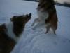 2010-12-20 Schneespaziergang - 57