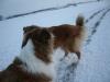 2010-12-20 Schneespaziergang - 60