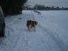 2010-12-20 Schneespaziergang - 69