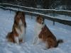 2010-12-20 Schneespaziergang - 7