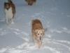 2010-12-20 Schneespaziergang - 72