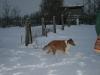 2010-12-20 Schneespaziergang - 75
