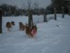 2010-12-20 Schneespaziergang - 77