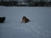 2010-12-20 Schneespaziergang - 78