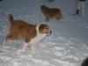 2010-12-20 Schneespaziergang - 80