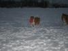 2010-12-20 Schneespaziergang - 83