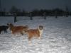 2010-12-20 Schneespaziergang - 86