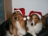 2010-12-24 Weihnachten - 1