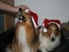 2010-12-24 Weihnachten - 10