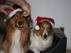 2010-12-24 Weihnachten - 11