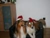 2010-12-24 Weihnachten - 21