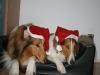 2010-12-24 Weihnachten - 4