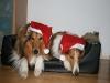 2010-12-24 Weihnachten - 5