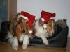 2010-12-24 Weihnachten - 7