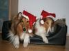 2010-12-24 Weihnachten - 8