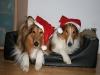 2010-12-24 Weihnachten