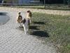 2011-03-19 Pensionsgast Abu - 122
