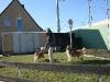 2011-03-19 Pensionsgast Abu - 131