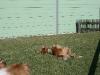 2011-03-19 Pensionsgast Abu - 18