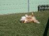 2011-03-19 Pensionsgast Abu - 23