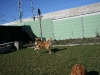 2011-03-19 Pensionsgast Abu - 57