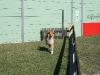 2011-03-19 Pensionsgast Abu - 6