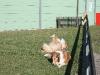 2011-03-19 Pensionsgast Abu - 82