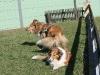 2011-03-19 Pensionsgast Abu - 85