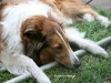 2011-05-28 Obedience - 122