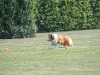 2011-05-28 Obedience - 68