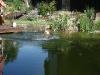 2011-06-28 Schwimmen - 15