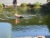 2011-06-28 Schwimmen - 37