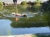 2011-06-28 Schwimmen - 38