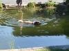 2011-06-28 Schwimmen - 39