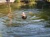 2011-06-28 Schwimmen - 44
